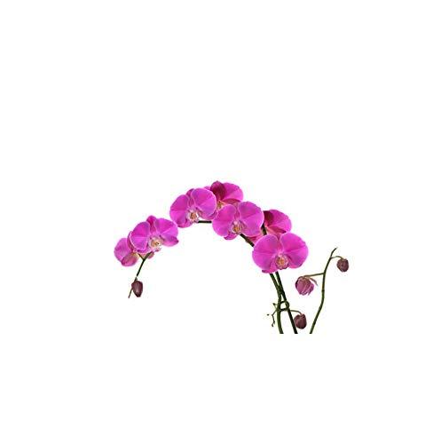 Wangyy 22,7 * 14,8 Cm Orchidee Schöne Blumen Wohnkultur Schlafzimmer Wandtattoo Wc Wc Sitz Aufkleber